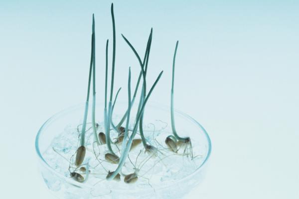 Plant Tissue Culture media-Hydrocolloids Supplier Manufacturer in China
