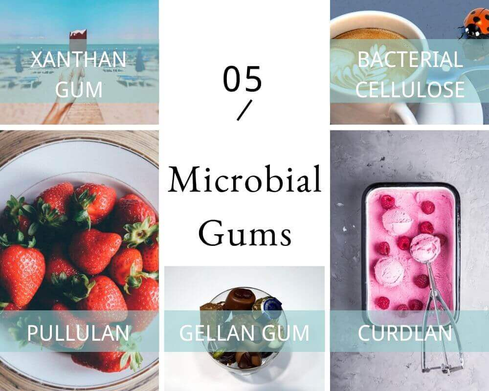 5 MAIN Microbial Gums: Gellan gum, Xanthan gum, Pullulan, Curdlan, Bacterial cellulose