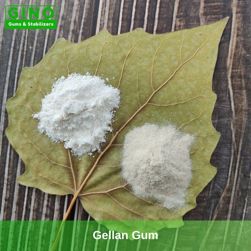 Gellan Gum 2020 Supplier Manufacturer in China(2) - Gino Gums Stabilizers