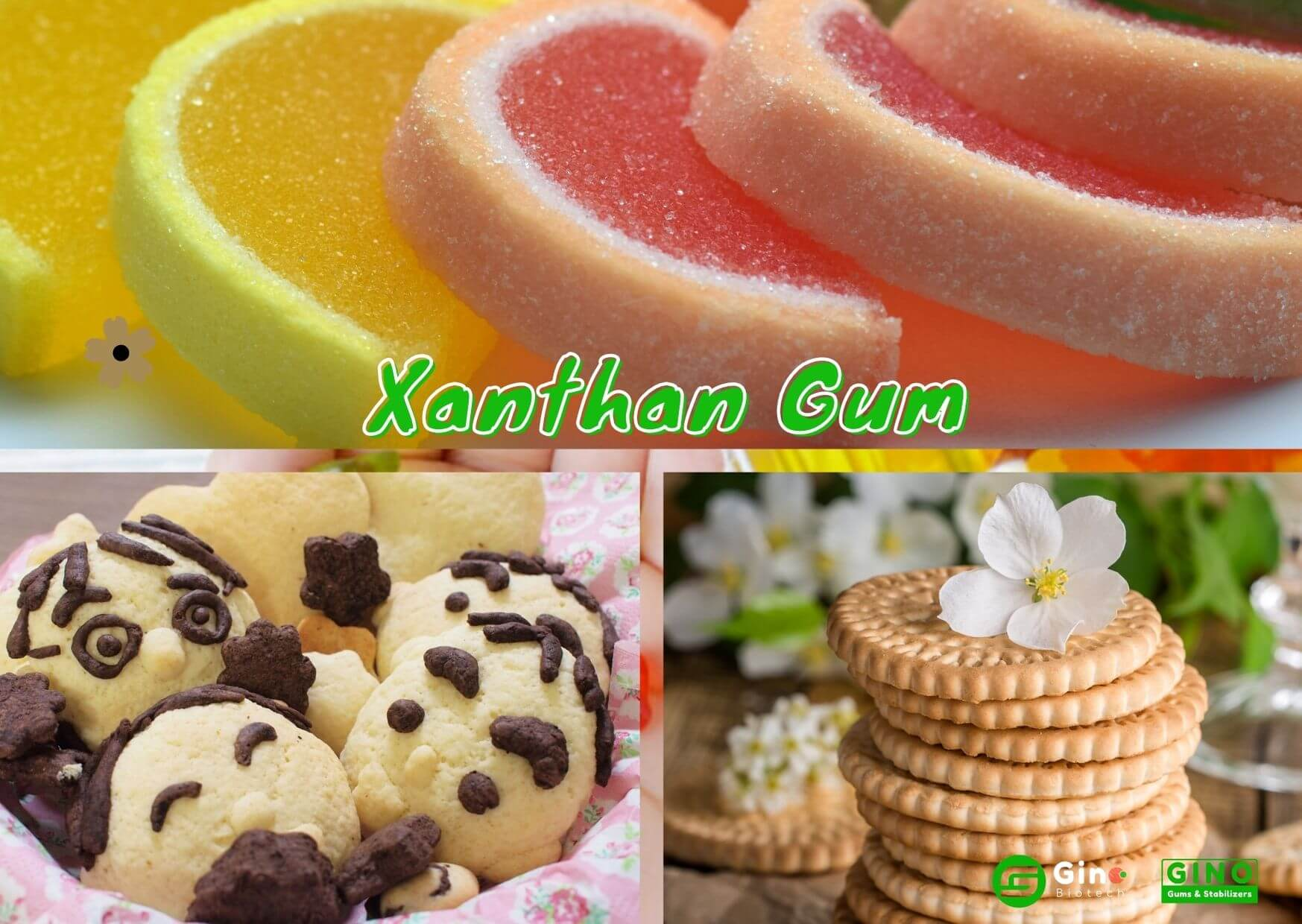xanthan gum uses