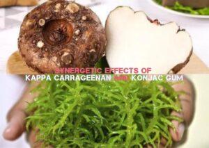 Synergetic Effects of Kappa Carrageenan and Konjac Gum (2)